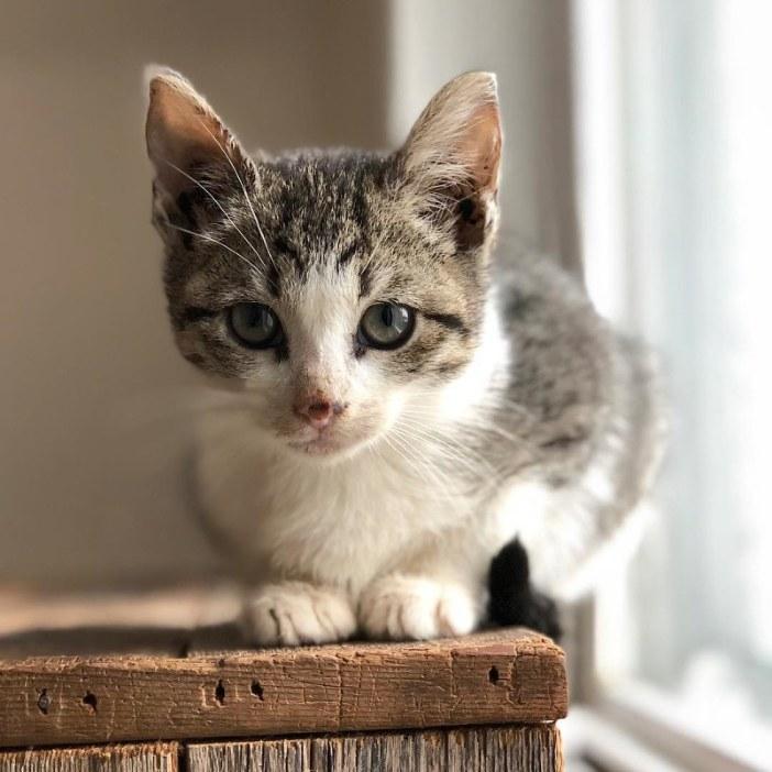 可愛く座る子猫