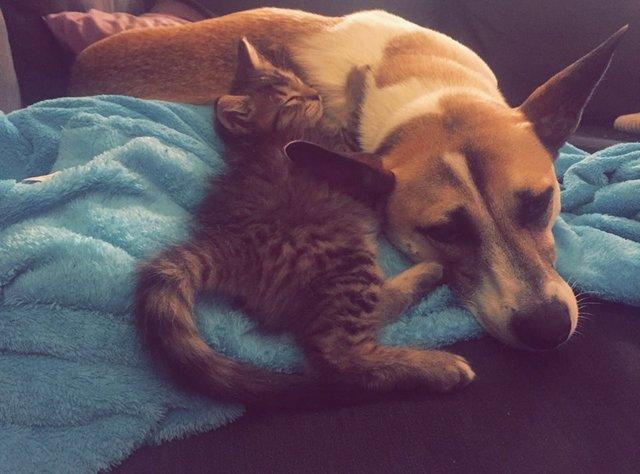 離れない犬と猫