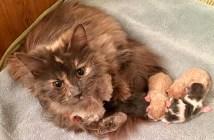 子猫へ愛情を注ぐ母猫