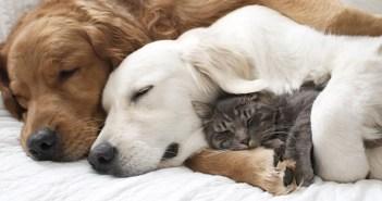 猫が好きな犬