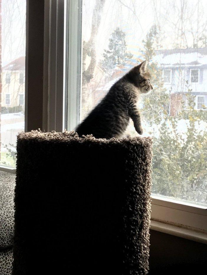 外を見る子猫