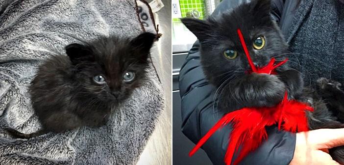 成長が止まった子猫