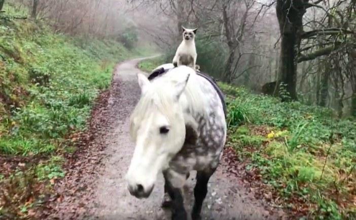 馬と一緒に散歩する猫