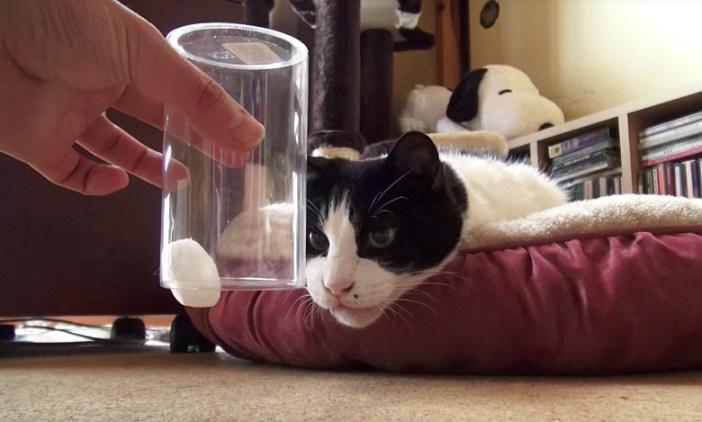 凝視する猫さん