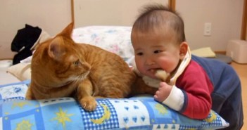 猫の尻尾を噛む赤ちゃん