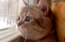 丸い顔の猫