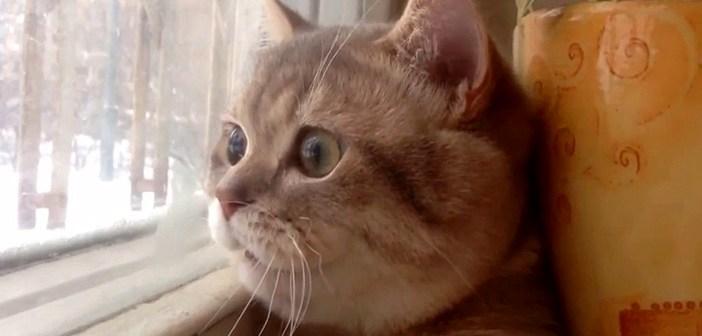 """何を話しているの? 窓の外を見つめながら、独り言をつぶやく """"まん丸猫さん"""" が可愛い (・∀・)♡"""