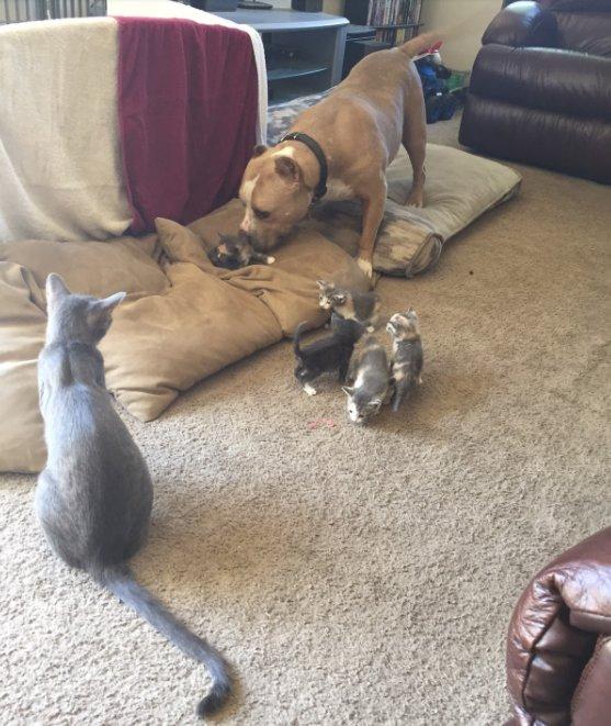 猫の親子と犬