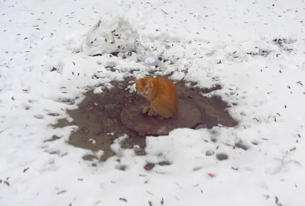 雪の中でご飯を食べる猫