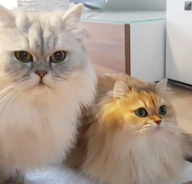 様子を見に来た同居猫