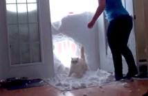 雪の壁を突き破る猫