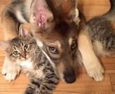 飼い犬が保護施設で1匹の子猫に一目惚れ! 子猫を家族に迎えてみると、驚くほど幸せいっぱいに! (9枚)