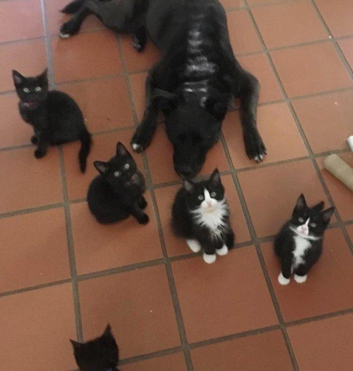 子猫がいっぱい