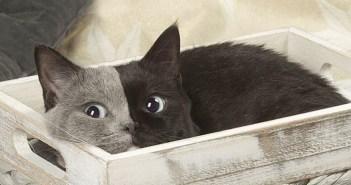 個性的な柄を持つ不思議な猫。左右に分かれた美しい顔に、思わず目を奪われる! (7枚)