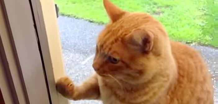 「今帰ったにゃ〜」玄関チャイムを鳴らしてドアを開けてもらう猫さんにビックリ ( ゚Д゚)!