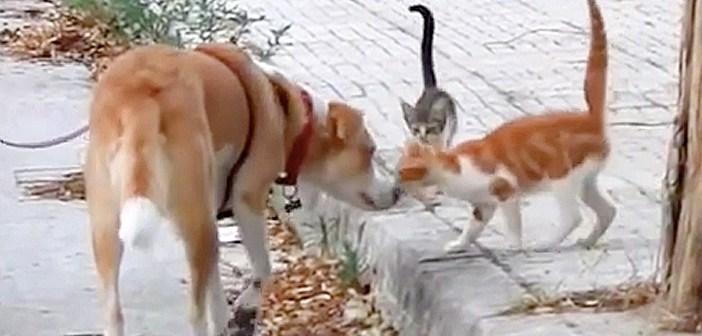 猫を助ける犬