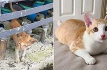 大きく変化した子猫