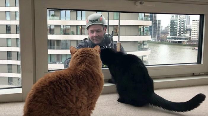 窓拭きおじさんと猫達