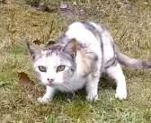 近づいてきた人間に身構えた野良猫。逃げるかと思いきや、恐る恐るモフモフされにやって来た ( *´艸`)♡