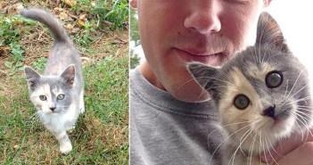 トウモロコシ畑で出会った子猫と男性。お互いに運命を感じたようで、次の瞬間には最高の家族に (〃∇〃)♡