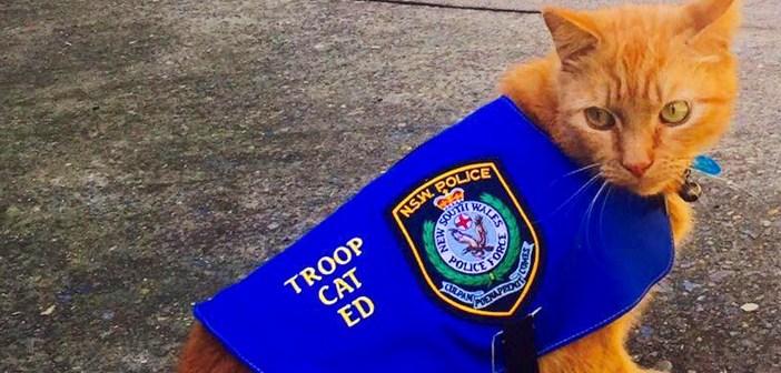 騎馬警官隊から重大な任務を任された猫。でも任務中についつい居眠りをしてしまい、大変なことに ( *´艸`)