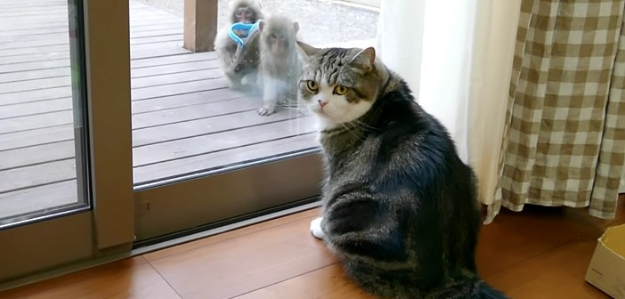 「あれは誰にゃ!?」窓の外にサルを見つけた猫さん。とっても気になるようで、まじまじと見つめ始めて ( *´艸`)