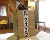 猫用に開発された、ダンボール製の跳び箱に挑む猫さん。果たして何段まで到達できるかな ( *´艸`)♪