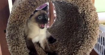 ビックリ子猫