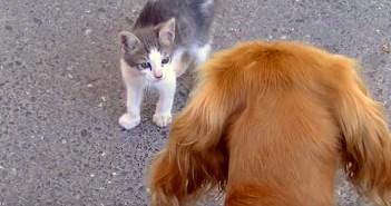 犬が怖い子猫