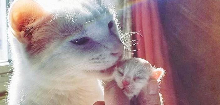 子猫を助ける猫