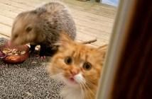 ポッサムと猫