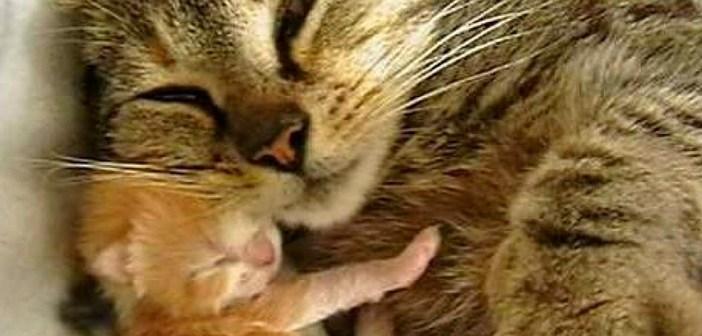 いつも世話してくれる女性を呼び止めた野良猫。保護の2時間後に、まさかのサプライズが (*゚0゚)!