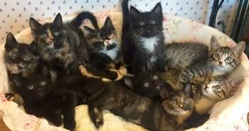 9匹の子猫を生かすため、自分のご飯を与え続けた母猫。倒れていたところを保護され元気を取り戻すと、幸せいっぱいに♪