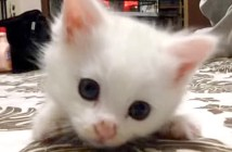 可愛い保護子猫
