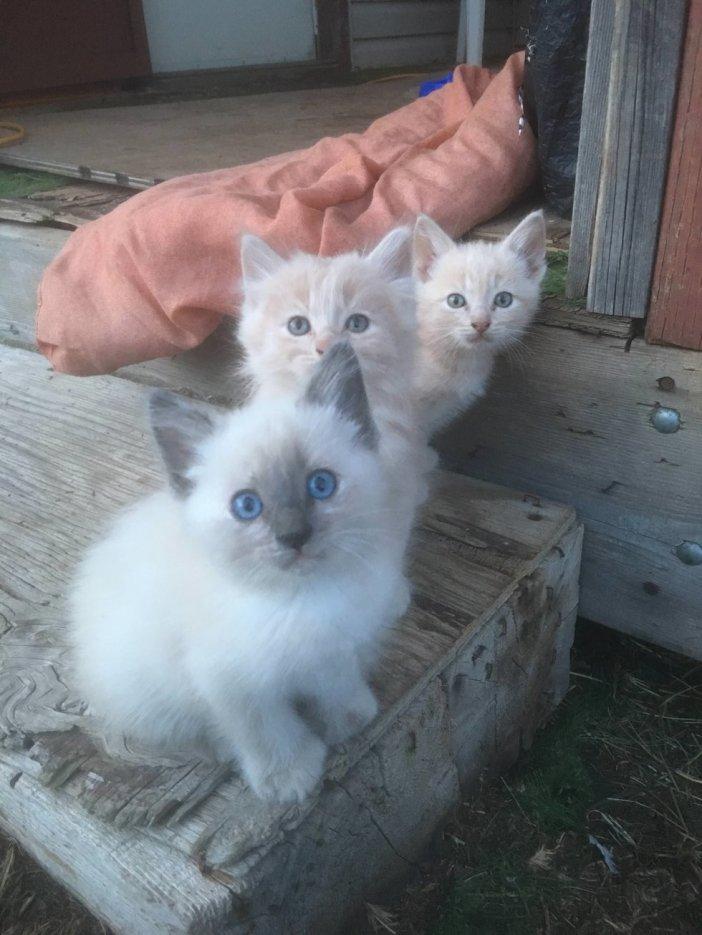 見つめてくる子猫達