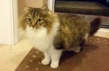 玄関から入って来た猫
