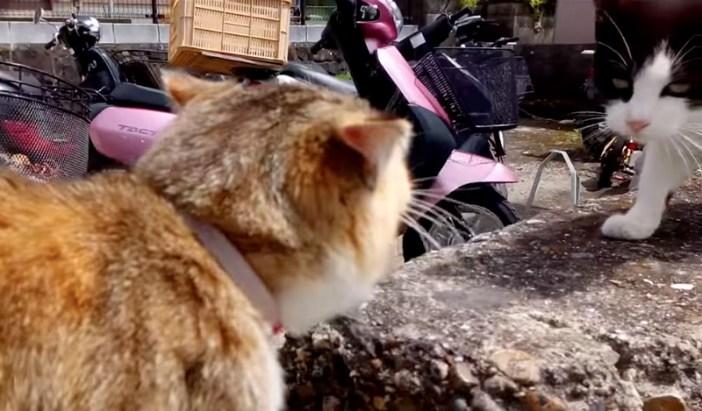 対峙する猫
