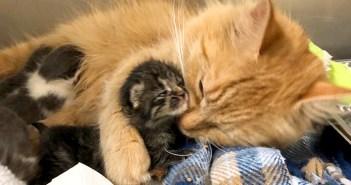 子猫を抱きしめる猫
