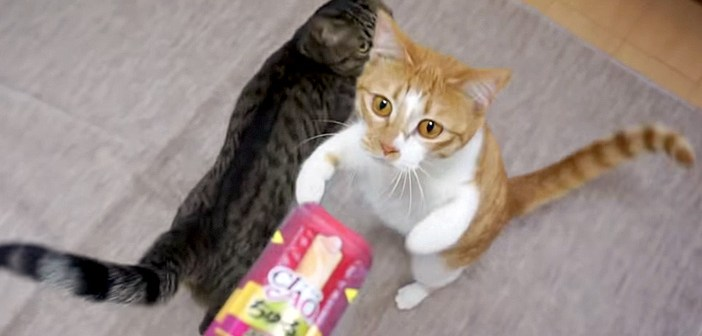 「ちゅ〜るだよ!」の言葉にピクッと反応した猫さん達。一瞬でテンションが上がって、激しい行動に出た (〃∇〃)!