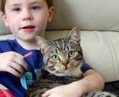 「ボクの兄弟に何するにゃ!」家族想いの勇敢な猫。男の子のピンチに駆け付け、いじめっ子達を見事に撃退!