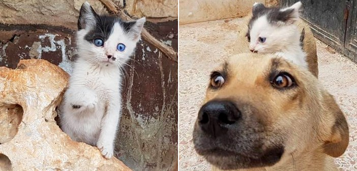 子供を失ったばかりの母犬に、近づいていった迷子の子猫。ピッタリとそばに寄り添い続け、彼女の新しい子供になる
