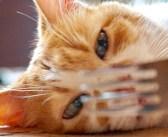 暑くて床の上で倒れている愛猫を発見。楽しませようとマジックを披露すると、面白い反応が返ってきた ( *´艸`)