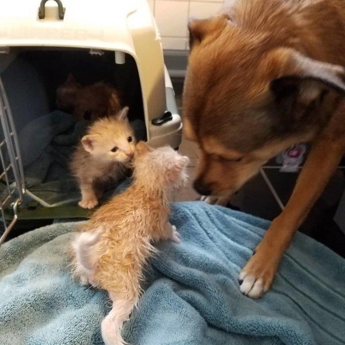 子猫を助けた犬