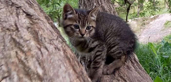 木登り中の子猫を撮影していたら、母猫が飛んできた! 我が子を大切に想う姿がとっても温かい (*´ェ`*)