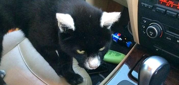 不思議な柄の猫さんはとってもフレンドリー♪ 身軽に車に乗り込んで、いつも挨拶をしてくれる (*´ω`*)