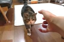 向かって来る猫
