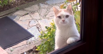お腹が空くとドアの外に現れる猫さん。家の中をじっと見つめてきて、無言の圧力をかけてきた!