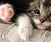 ある日突然、家の中から子猫が消えた! 家族総出で家中を探し回ると、1時間後に予想外の場所で発見!