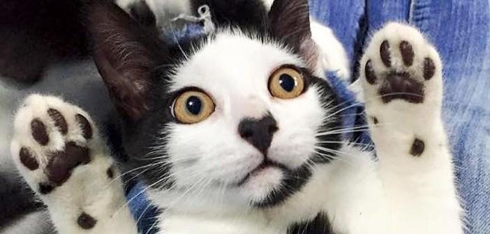 鼻にハートマークのある子猫。保護先で人の優しさに触れると、怖がりだった子猫のハートが幸せでいっぱいに♡