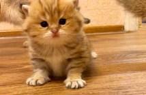 ムーンウォーク子猫